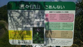 DSC_1153_R.JPG
